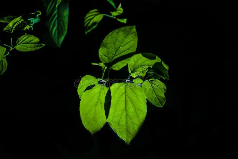绿色叶子在晚上 免版税库存图片