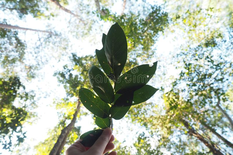 绿色叶子在森林里 免版税库存图片