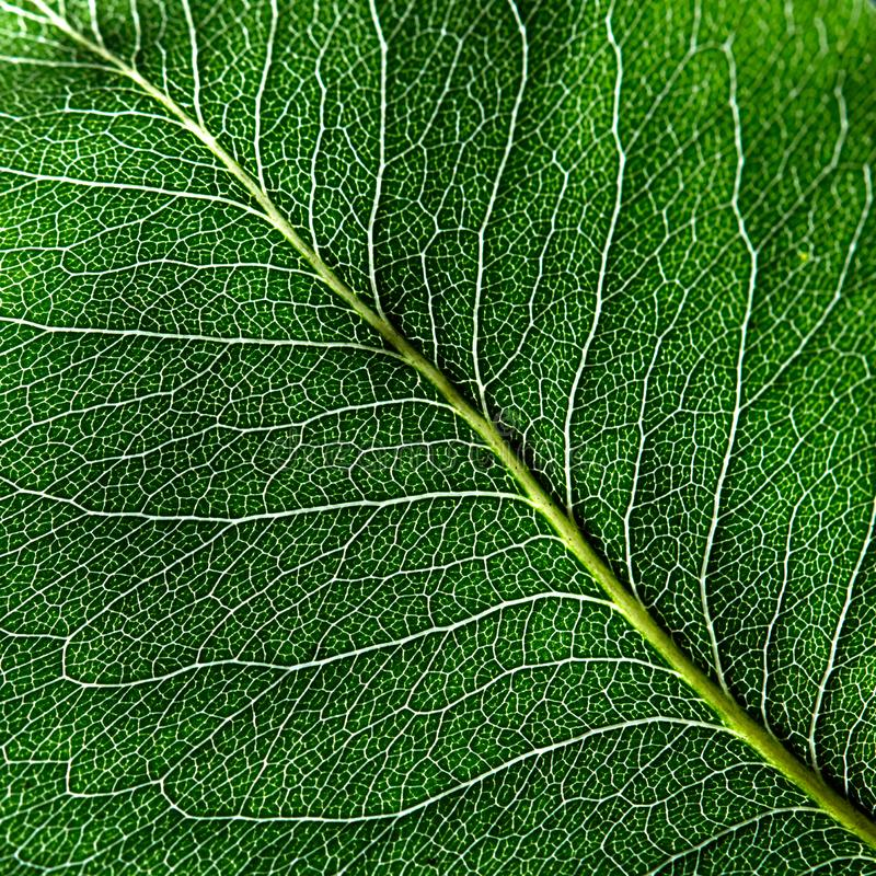 绿色叶子最小的条纹的宏观照片  布局的自然样式 顶视图 库存图片