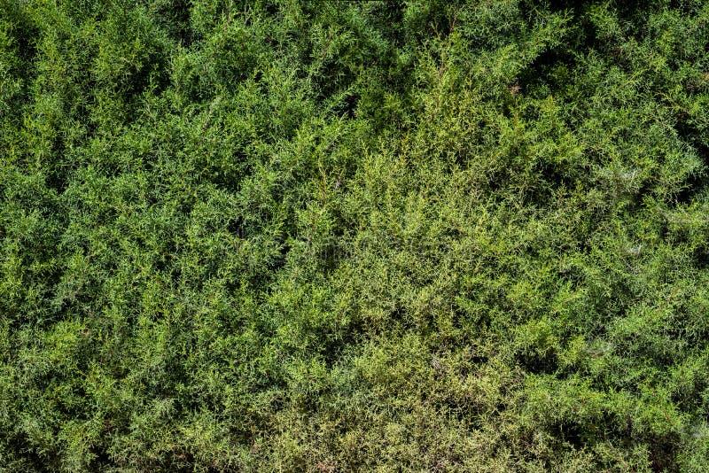 绿色叶子构造背景墙纸 库存图片