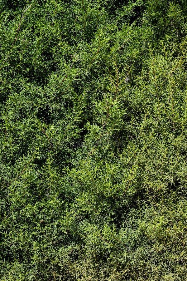 绿色叶子构造背景墙纸 库存照片