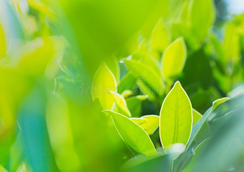 绿色叶子样式、绿色自然背景和阳光 图库摄影