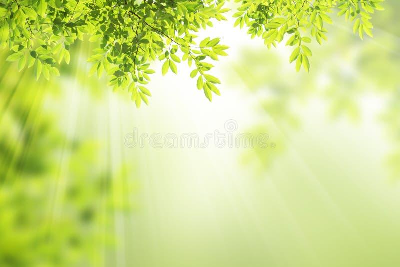 绿色叶子框架。 免版税库存照片
