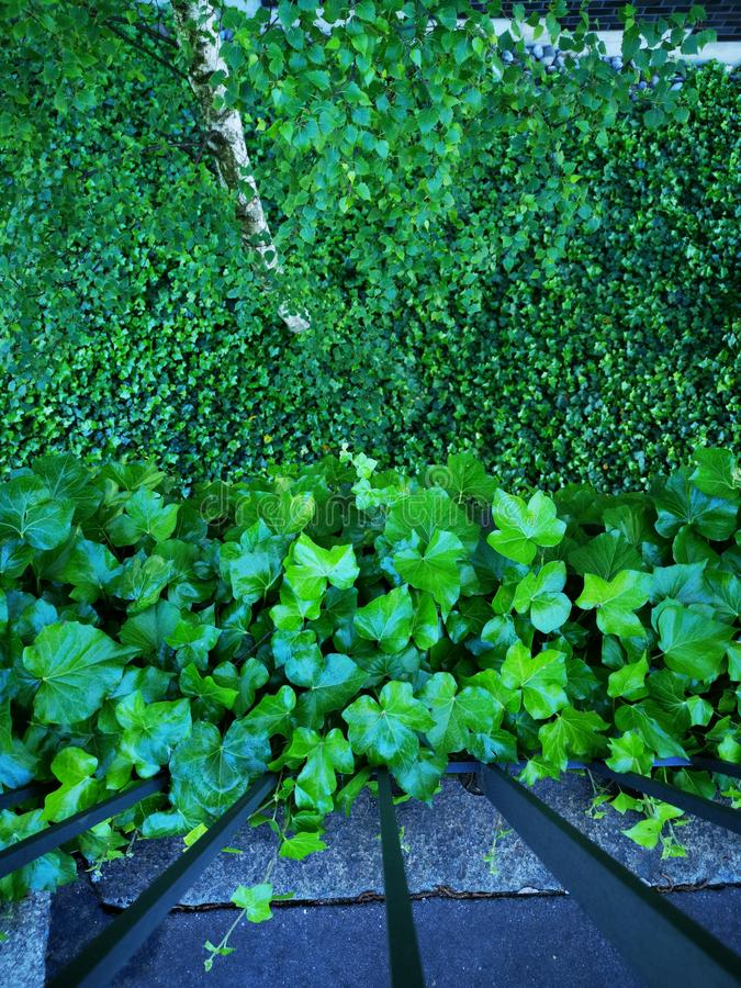 绿色叶子森林上上下下 免版税库存照片
