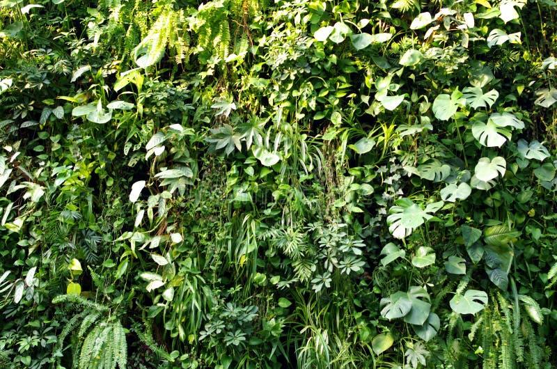 绿色叶子植物墙壁 库存图片