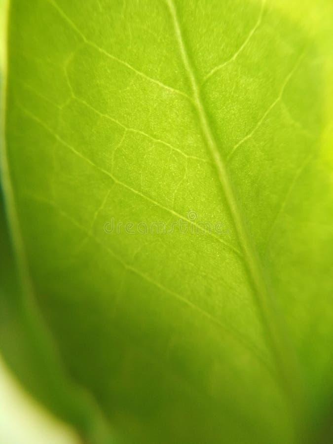 绿色叶子植物花弄脏了defocused背景纹理宏指令照片 图库摄影