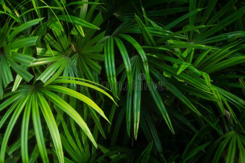 绿色叶子的颜色对自然背景的 免版税库存图片