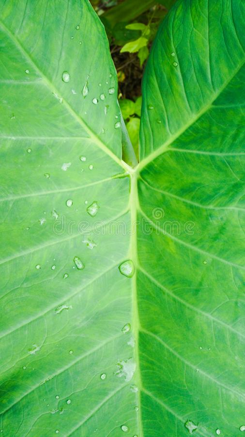 绿色叶子纤维样式补丁 免版税图库摄影