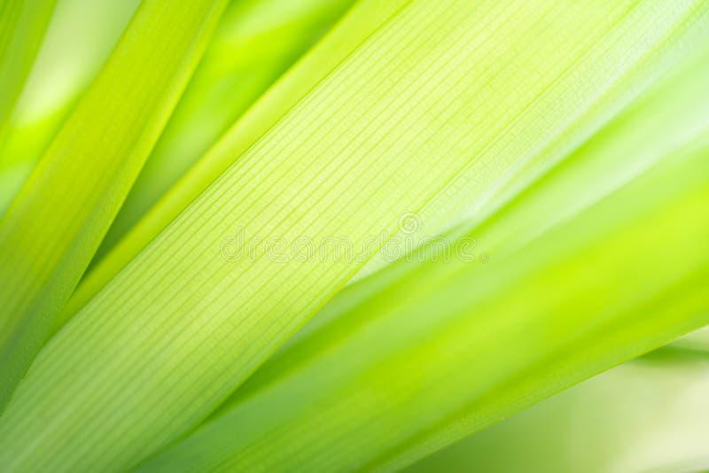 绿色叶子纹理背景宏观摄影  免版税库存照片