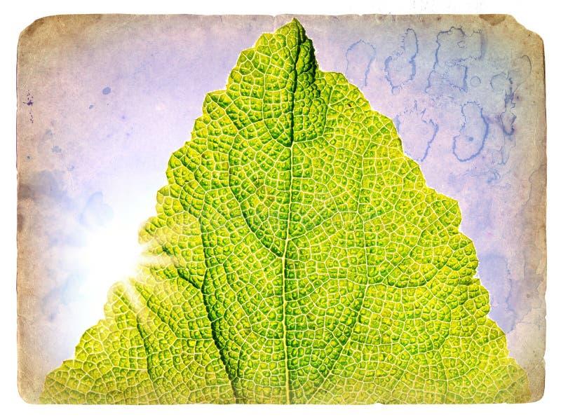 绿色叶子老明信片春天 库存例证