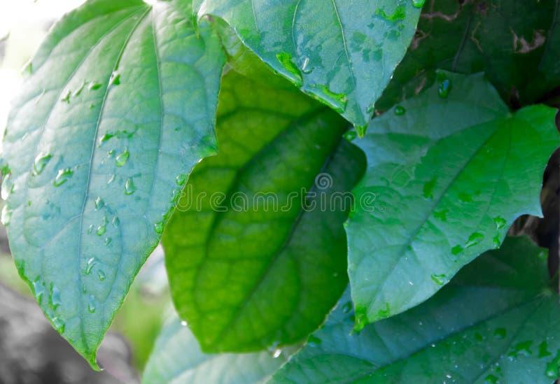 绿色叶子背景多汁仙人掌叶子和抽象普通叶子 库存照片