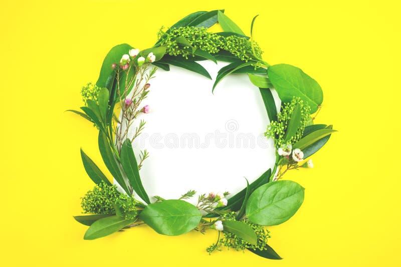 绿色叶子计划了以在一张白色纸片的一个花圈的形式在黄色背景的 免版税库存照片