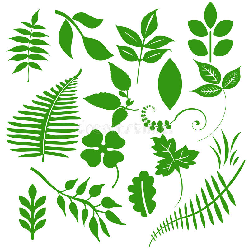 绿色叶子 向量例证