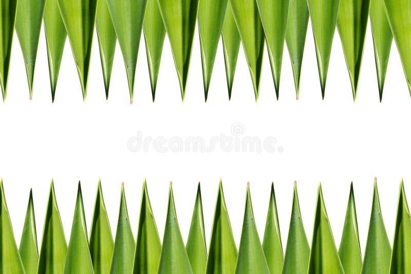 Download 绿色叶子 库存照片. 图片 包括有 昆虫, bossies, 空间, 室外, 照亮, 增长, brander - 22355198
