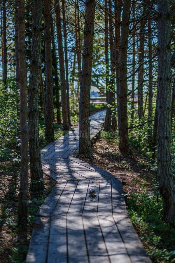 绿色叶子sourroundings的木板条footh道路木板走道 库存照片