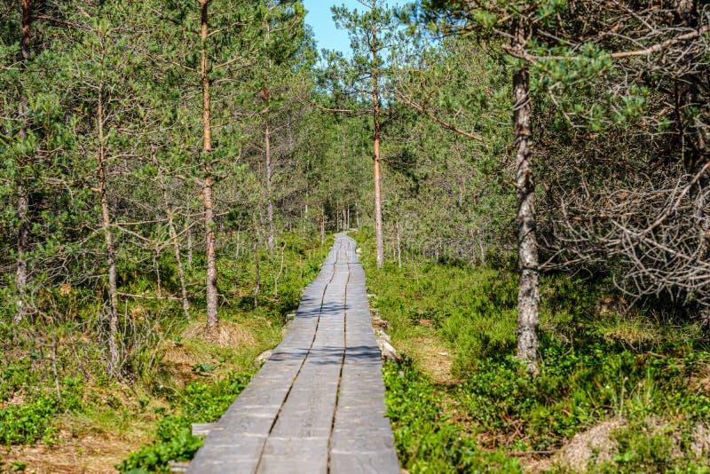 绿色叶子sourroundings的木板条footh道路木板走道 免版税图库摄影