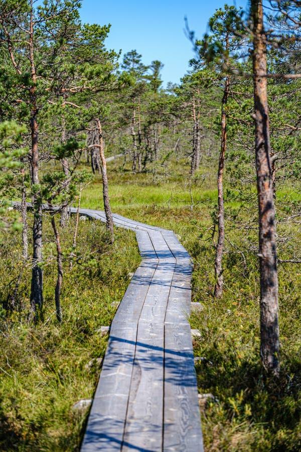绿色叶子sourroundings的木板条footh道路木板走道 免版税库存图片