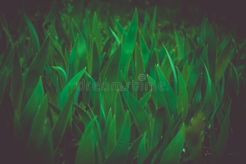 绿色叶茂盛草本在树荫下 免版税库存图片