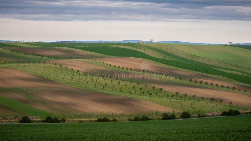 绿色和棕色领域风景看法在美丽的波浪乡下 库存图片