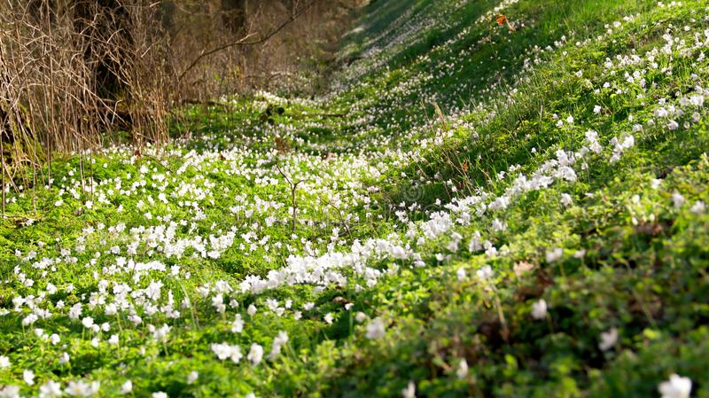 绿色和白色在春天一起进来 免版税库存照片