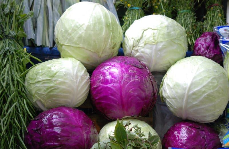 绿色和紫色圆白菜菜背景 免版税库存照片