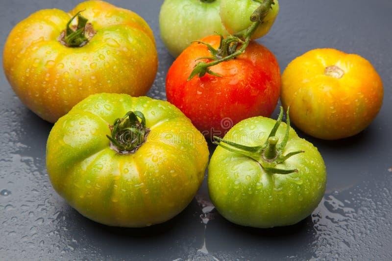 绿色和红色蕃茄,成熟的过程 免版税库存图片