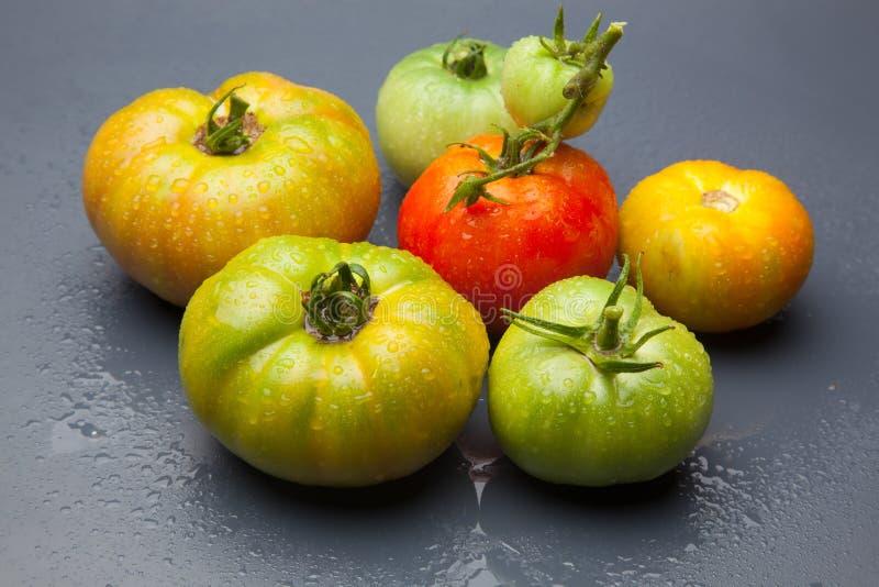 绿色和红色蕃茄,成熟的过程 免版税图库摄影