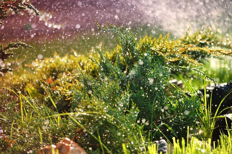 绿色园林植物在夏天雨珠下的庭院里 库存图片