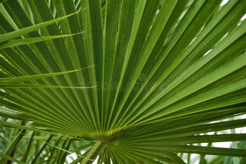 绿色图表棕榈叶背景  免版税图库摄影