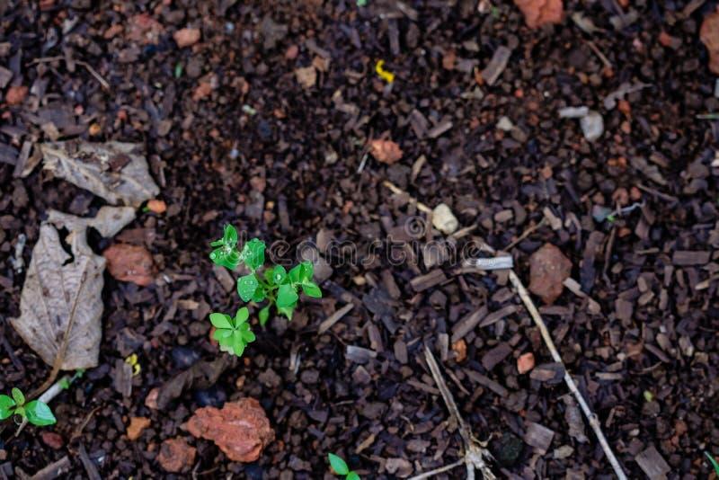 绿色在光,迷离留下生长从地球,沐浴 免版税库存照片