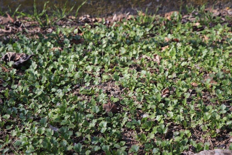 绿色在庭院里 库存照片