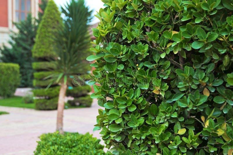 绿色在晴天把背景留在 绿色叶子有迷离自然背景 与槭树的绿色自然背景为yo离开 免版税库存图片