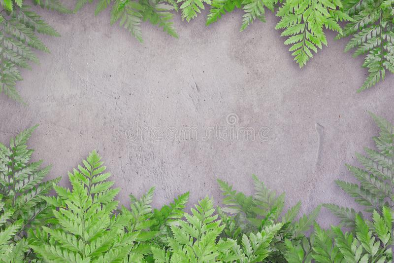 绿色在混凝土离开与文本的,自然边界空间 免版税图库摄影