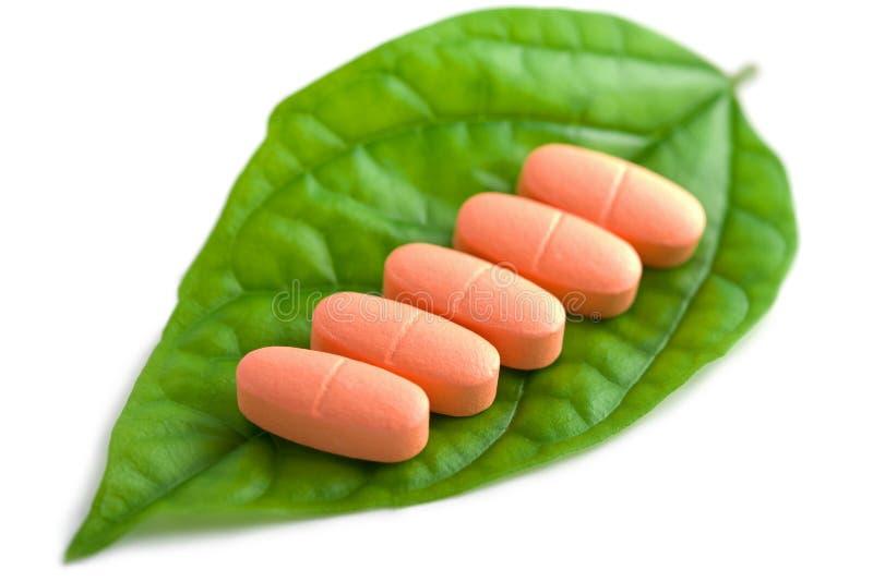 绿色在药片规定的查出的叶子 免版税图库摄影