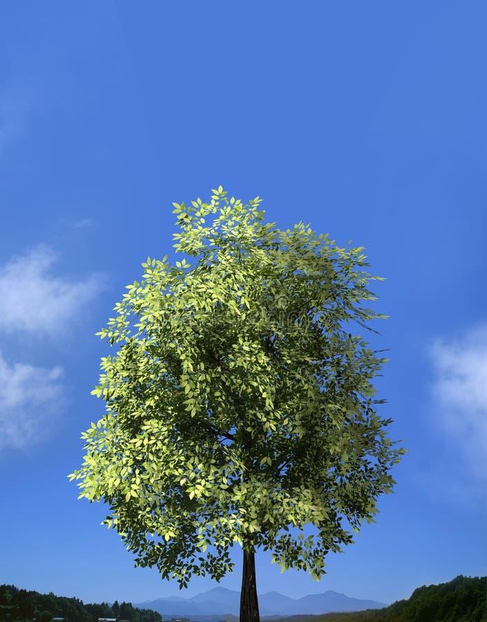 绿色域和偏僻的结构树-横向 免版税库存图片