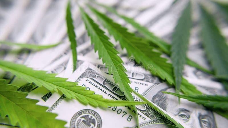 绿色大麻叶子,在一百美元金钱背景的大麻  大麻,ganja叶子 企业概念,大麻药物 库存照片