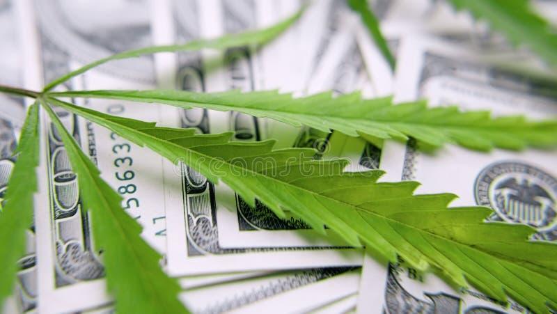 绿色大麻叶子,在一百美元金钱背景的大麻  大麻,ganja叶子 企业概念,大麻药物 免版税库存照片