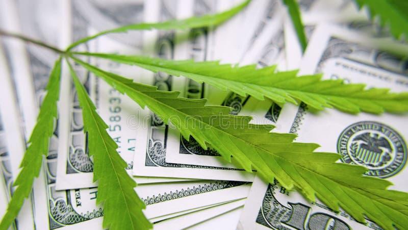 绿色大麻叶子,在一百美元金钱背景的大麻  大麻,ganja叶子 企业概念,大麻药物 免版税库存图片