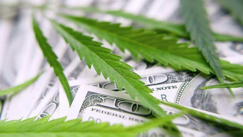 绿色大麻叶子,在一百美元金钱背景的大麻  大麻,ganja叶子 企业概念,大麻药物 库存图片