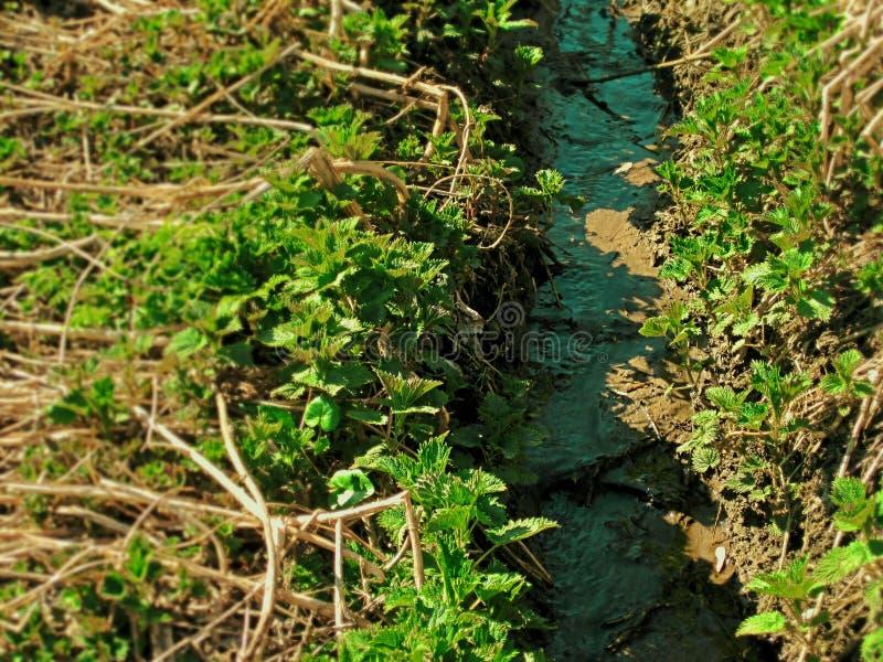 绿色小河在森林里 免版税图库摄影