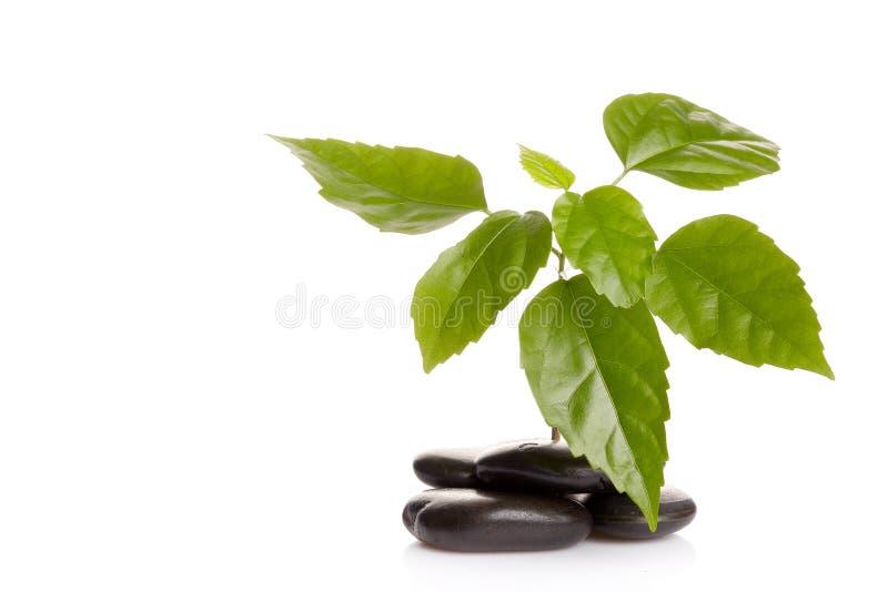 绿色小的新芽石头 免版税库存图片