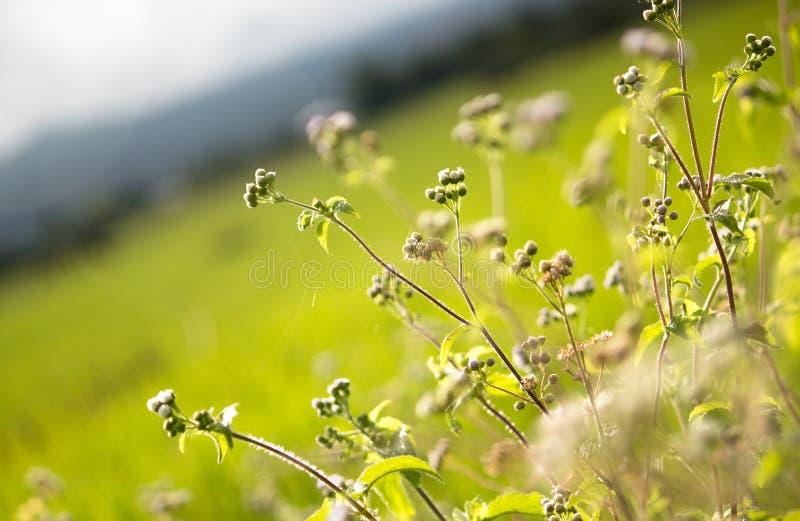 绿色小的植物背景  免版税库存图片
