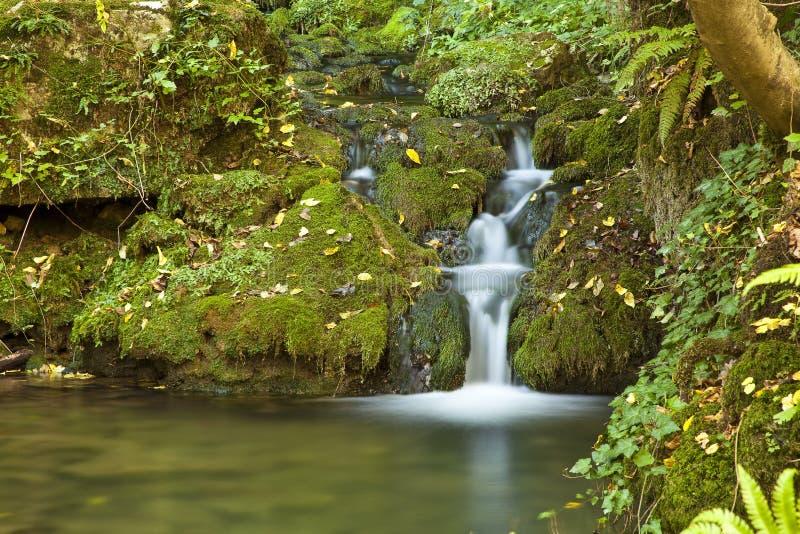 绿色小的瀑布 库存照片