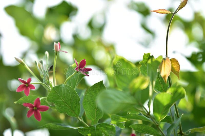 绿色小花和树在日落 图库摄影