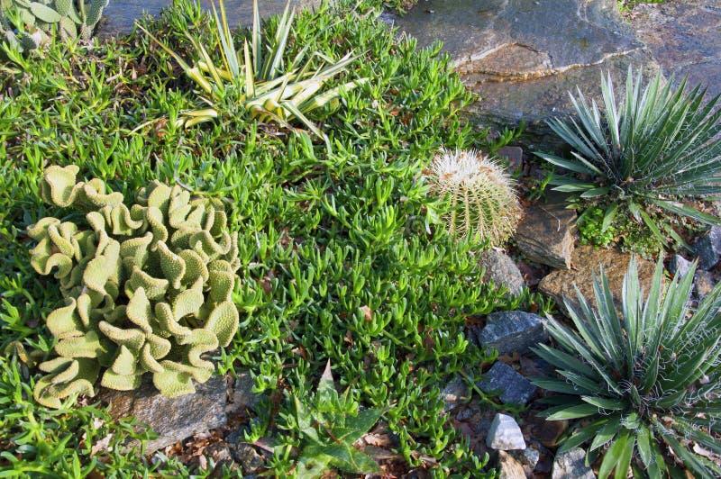 绿色小花园、仙人掌和不同的多汁 法国波尔多 库存图片