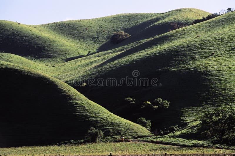 绿色山坡滚 免版税库存照片