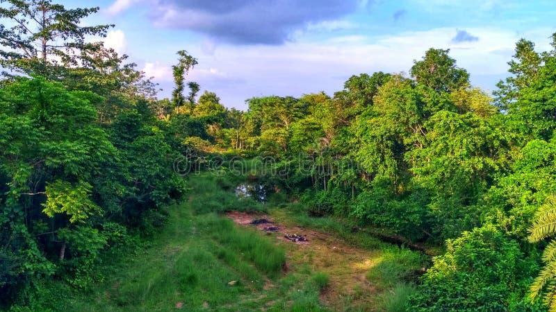 绿色山谷 库存图片