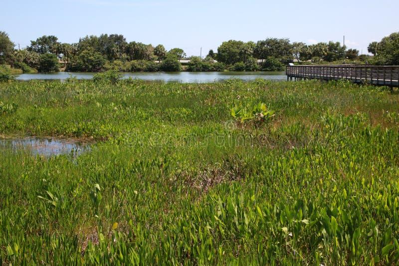 绿色岩礁沼泽地 免版税库存照片