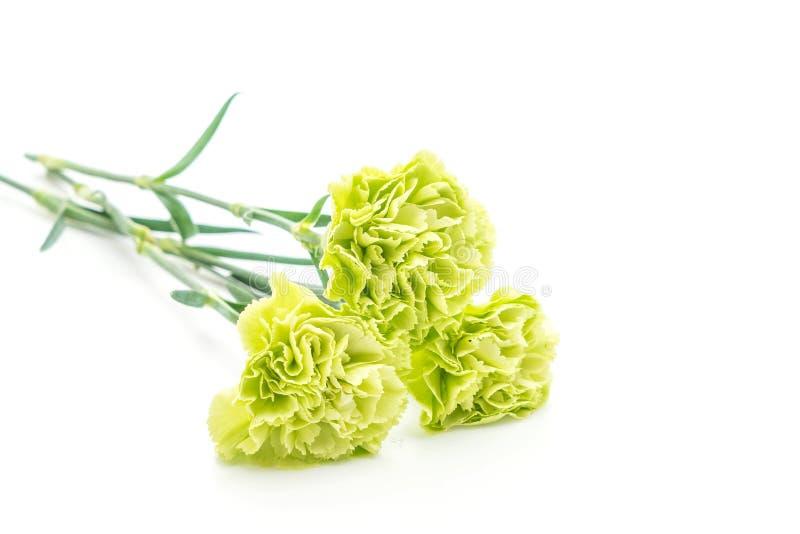 绿色康乃馨花 库存图片