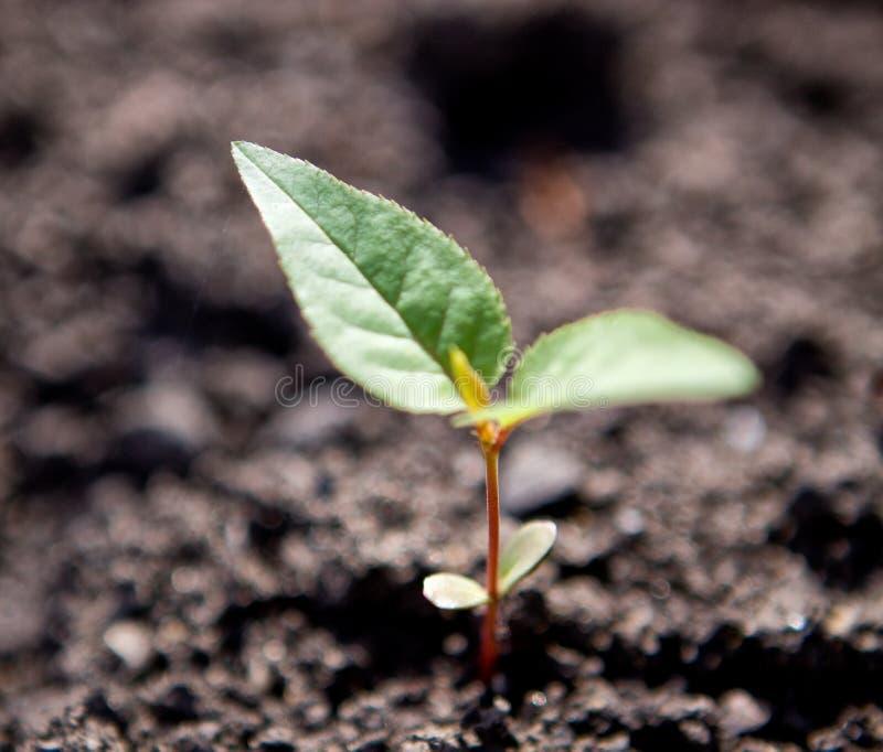 Download 绿色新出生 库存照片. 图片 包括有 发芽, 增长, browne, 生长, 自然, 有机物, 污染, 概念 - 22358666